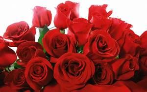 Gelb Rote Rosen Bedeutung : valentinstag bedeutung wie feiert man den valentinstag weltweit ~ Whattoseeinmadrid.com Haus und Dekorationen