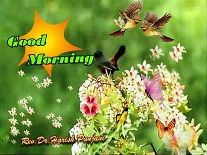 Morning Spring Wishes