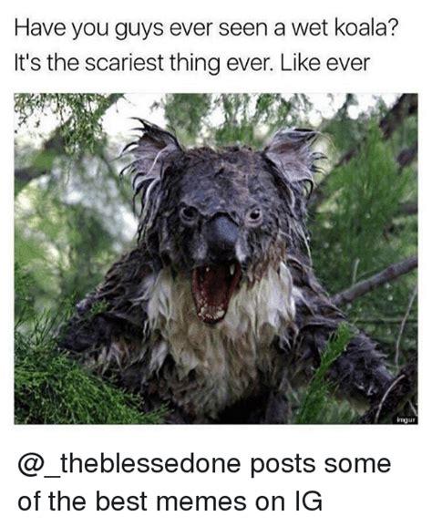 wet koala memes scariest memes  memes