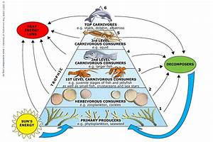 Marine Food Webs  U2014 Science Learning Hub