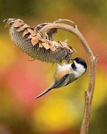 Backyard Chickadee Birds Capped Pet Google Feeders