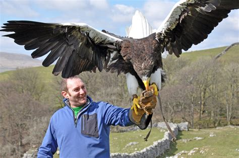10 Biggest Eagles In The World | Ann Novek( Luure)–With ...