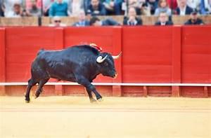Rebalance Even As Bull Keeps Running
