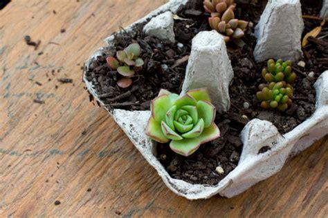 egg carton succulents succulent gift ideas