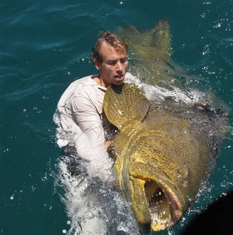 grouper goliath below fish braid 30lb impossible happened caught above