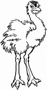 Ostrich Coloring Clipart Young Clipartpanda Pages Printable Categories Terms sketch template