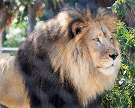 travel  kids san diego zoo