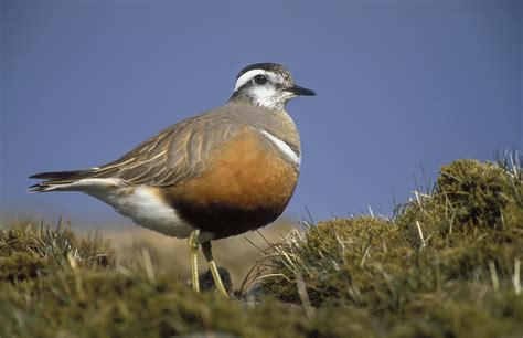 wild scotland wildlife and adventure tourism birds