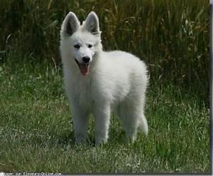 Bébé Loup Blanc : naissances tout ptits page 4 ~ Farleysfitness.com Idées de Décoration