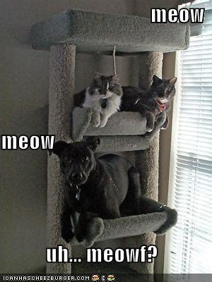 random interesting topics   funnycute cat