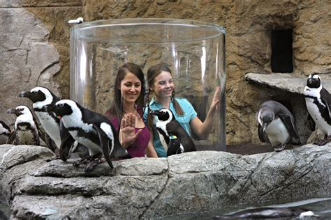aquarium ripley gatlinburg smokies penguin penguins tn playhouse tennessee 10best places tripadvisor