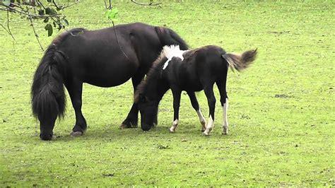 horse pony baby cute pferd