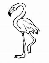 Flamingo Coloring Pages Clipart Bird Flamingos Cartoon Drawing Outline Birds Printable Clip Animal Normal Clipartmag Colors Categories Colorings Lucy sketch template