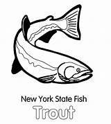 Trout Coloring Pages York State Fish Apache Template Brook Sketch Tocolor sketch template