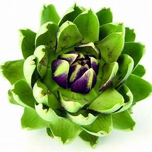 Artichoke Leaf Extract Biobenefity Natural Cosmetic Ingredient From Japan Gifu   Artichoke Leaf
