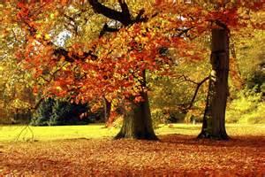 Pumpkin October Fall Leaves