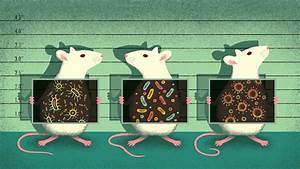 Mouse microbes may make scientific studies harder to ...