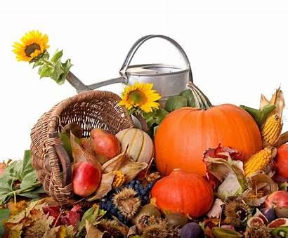 Autumn Harvest Thanksgiving Desktop Novembre Sunflower Orto