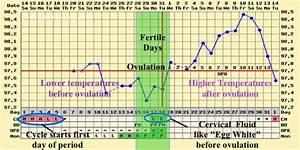 Bbt Chart Longevity Acupuncture Miami Fl Women 39 S