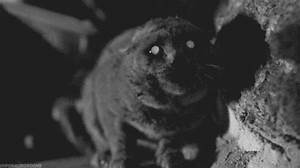 Scary GIFs: Scary Cat GIF Animation
