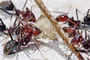 Gegen Ameisen Im Garten : ameisen bek mpfen hausmittel gegen ameisen im haus und garten wohnen einrichtung trends ~ Michelbontemps.com Haus und Dekorationen
