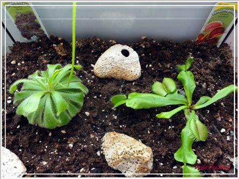 Garten Pflanzen September by Unsere Fleischfressenden Pflanzen Karnivoren