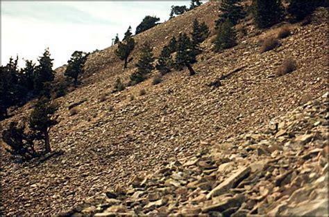 Mount Mestas