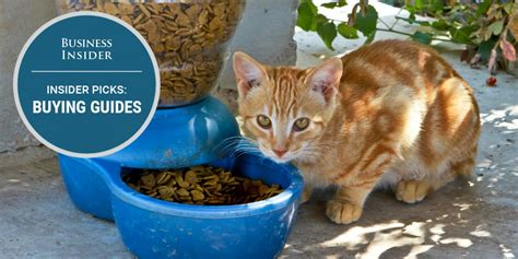best cat food the best cat food you can buy business insider