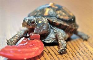 Cutest Baby Turtles and Tortoises | Cuteness Overflow