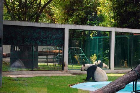 zoo chapultepec mexico panda giant circus spin zone