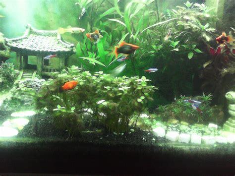 pourquoi j ai des algues dans mon aquarium