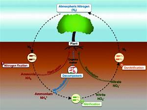 Nitrogen Cycle At The Interfaces Among Air  Soil  And