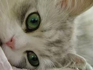 World's Most Beautiful Cat Eyes | rantz