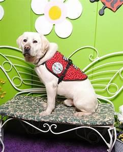 sdwr diabetic alert service dog