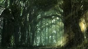 ¿Cuáles son los bosques que no se recomienda visitar? - RT