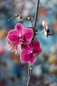Orchideen Umtopfen Video : orchideen pflege tipps kreative fotografie tipps und ~ Watch28wear.com Haus und Dekorationen