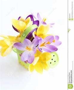 Spring Flowers On White Background Stock Image - Image ...
