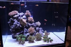 Reef, Octopus, Luxury, Aquarium, Has, Unique, Minimalist, Overflow
