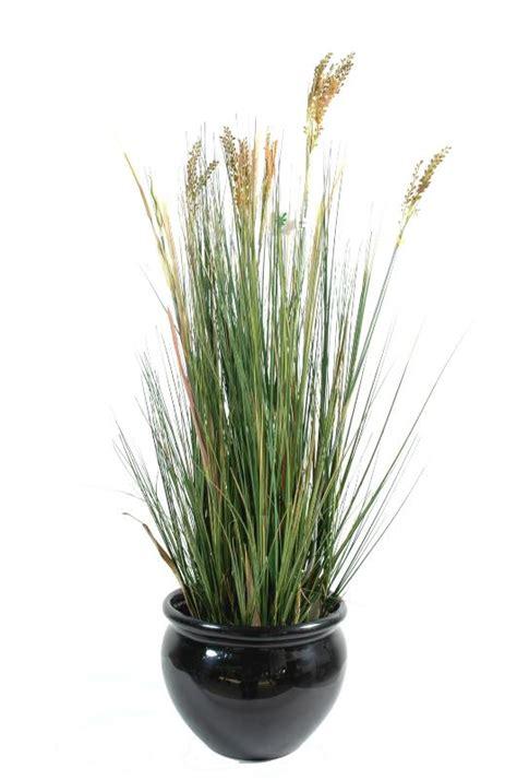 planter un papyrus en pot plante artificielle papyrus scirpus validus fleuri en pot int 233 rieur h 125cm