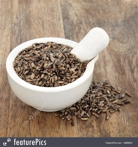 Herbs Milk Thistle Herb Stock Picture I4888822 At