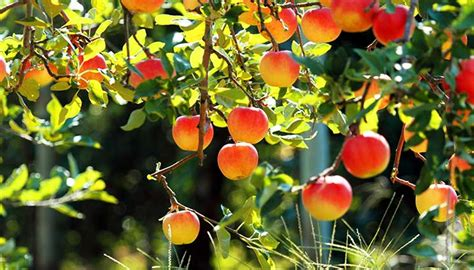 How To Plant Barerooted Fruit Trees  The Prepper Journal