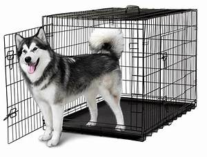 48 dog crate 2 door w divide w tray folding metal pet With dog cage for two dogs