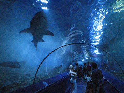 largest aquarium in the world 10 largest aquariums in the world with photos map touropia