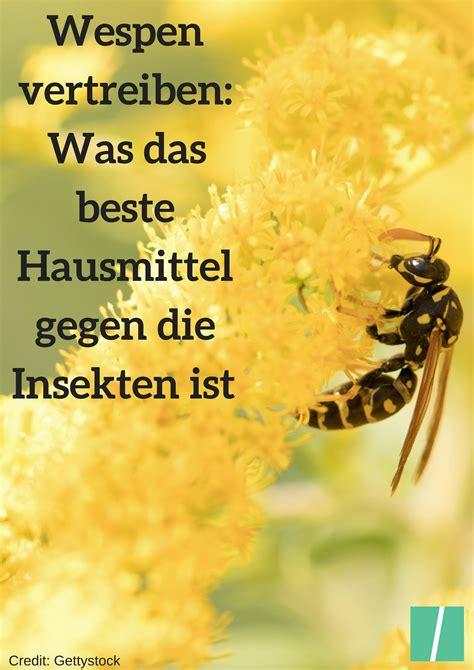 hausmittel gegen wespen hausmittel gegen wespen so vertreibt ihr die insekten am effektivsten tipps f 252 r den alltag