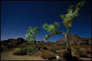 Joshua Trees Under The Night Sky Full Moon At Joshua