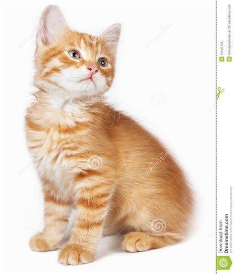 Rode katten katers