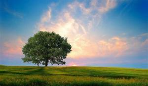 Green, Hd, Tree, Photo, Wallpapers, Hd, Desktop, And, Mobile