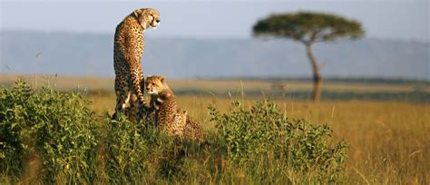 The future of Africa s wildlife is in African hands