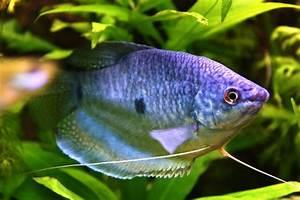 Poisson Aquarium Eau Chaude : aquarium poisson eau douce poisson naturel ~ Mglfilm.com Idées de Décoration