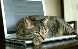 cat laptop dell customers complain about laptops that smell of cat